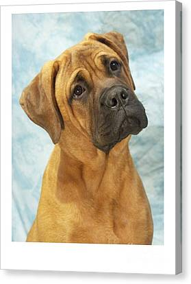 Boxer 169 Canvas Print by Larry Matthews