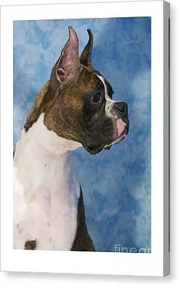 Boxer 469 Canvas Print by Larry Matthews