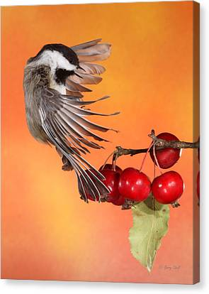 Canvas Print featuring the photograph Bracing To Back Up by Gerry Sibell