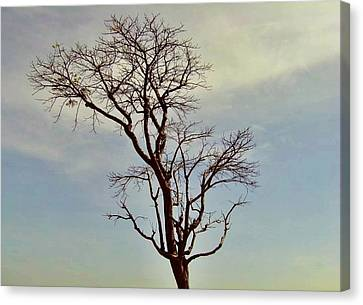Branch Out Canvas Print by Peter P G