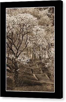 Branchbrook Park In Sepia Canvas Print
