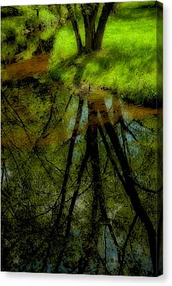 Branches Of Life Reflects Canvas Print by Karol Livote