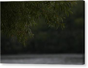 Branches Over Water Canvas Print by Static Studios