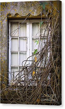 Outlook Canvas Print - Branchy Window by Carlos Caetano