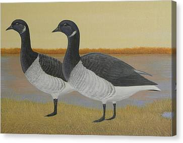 Brant Geese Canvas Print by Alan Suliber