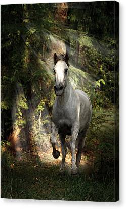 Breaking Dawn Gallop Canvas Print by Wes and Dotty Weber