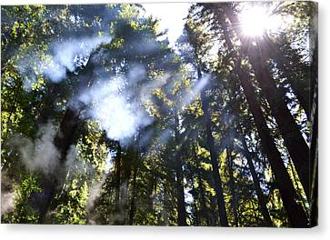 Breaking Through The Trees Canvas Print