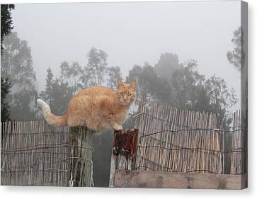 Bridging Cat Canvas Print by Ron McMath