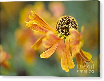 Bright And Breezy  Canvas Print by Jacky Parker