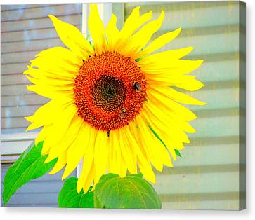 Bright Happy Sunflower Face Canvas Print by Amy Bradley