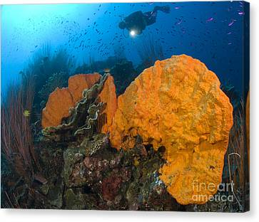 Bright Orange Sponge With Diver Canvas Print by Steve Jones