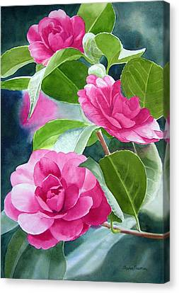 Bright Rose-colored Camellias Canvas Print by Sharon Freeman