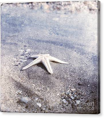 Bright Star Canvas Print by Paul Grand