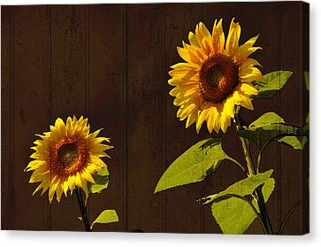 Canvas Print featuring the photograph Bright Sunflower Pair by Nancy De Flon