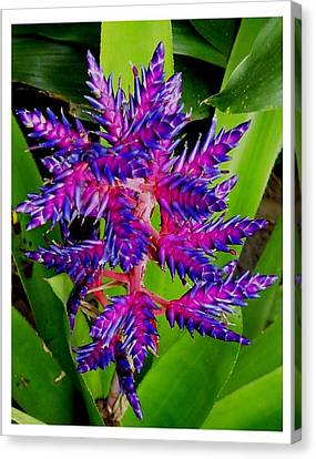 Canvas Print featuring the photograph Brilliant And Bold by Frank Wickham
