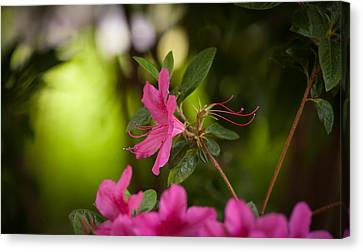 Brilliant Beauty Canvas Print by Mike Reid