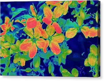 Brilliant Blossoms II Canvas Print by Tessa Murphy