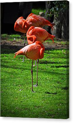 Brilliant Flamingos Canvas Print by Mary Machare