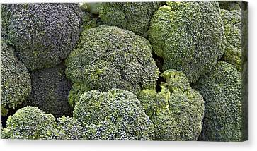 Broccoli Canvas Print by Forest Alan Lee