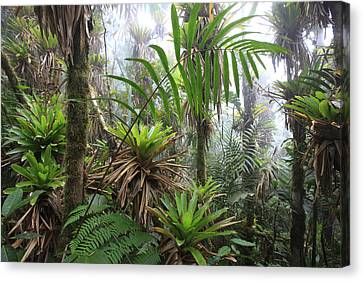 Bromeliads And Tree Ferns  Canvas Print