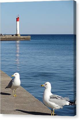 Canvas Print featuring the photograph Bronte Lighthouse Gulls by Laurel Best