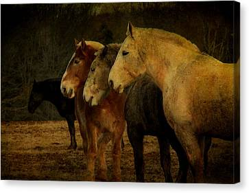 Brothers Canvas Print by Christine Annas