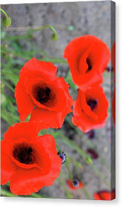 Brothers Of Red Canvas Print by Empty Wall
