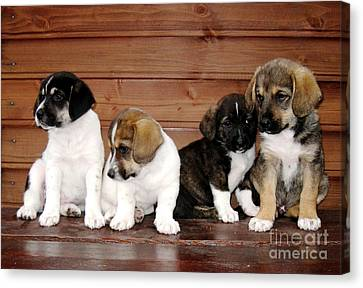 Brothers Puppies Canvas Print by AmaS Art