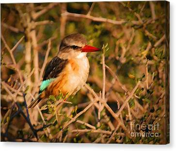 Brown-hooded Kingfisher South African Kingfisher Canvas Print by Andy Smy