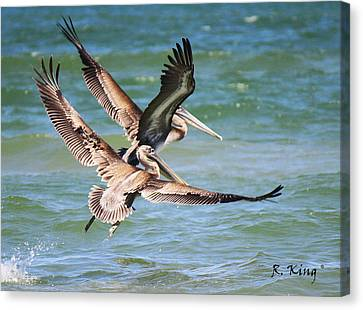 Brown Pelicans Taking Flight Canvas Print