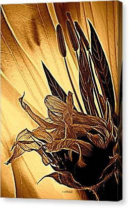 Brown Wildflowers Canvas Print by Chris Berry