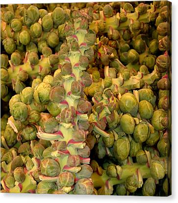 Brussel Sprouts Canvas Print