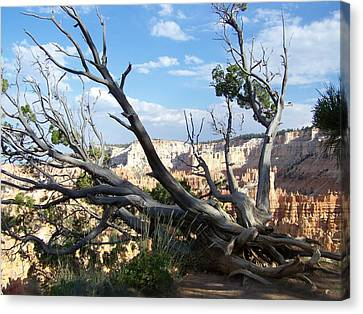 Bryce Canyon Canvas Print by Dany Lison
