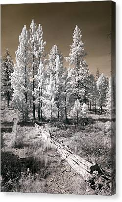 Canvas Print featuring the photograph Bryce Canyon Infrared Trees by Mike Irwin