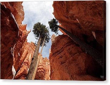 Canvas Print featuring the photograph Bryce Canyon Towering Hoodoos by Karen Lee Ensley