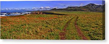 Buchon Trail Canvas Print