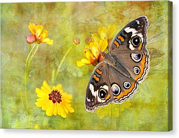 Buckeye Butterfly In The Meadow Canvas Print by Bonnie Barry