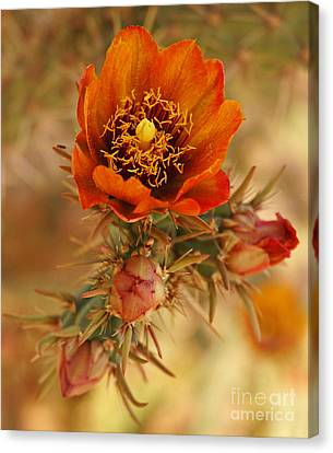 Buckhorn Cholla 2 Canvas Print
