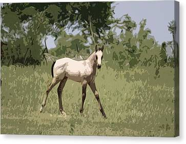 Buckskin Pony Canvas Print