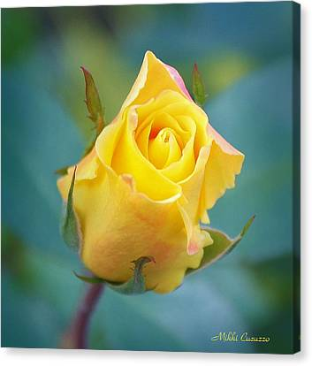 Budding Yellow Rose Canvas Print by Mikki Cucuzzo