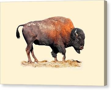 Buffalo Bill Canvas Print by Dewain Maney
