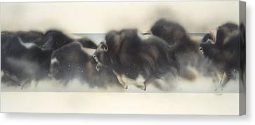Buffalo In Winter Canvas Print by Douglas Fincham