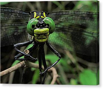Canvas Print featuring the photograph Bug-eyed by Doug McPherson