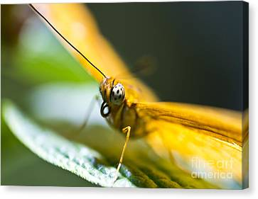 Bug Out Canvas Print by Leslie Leda