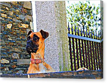 Canvas Print - Buldog by Jenny Senra Pampin