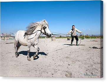 Bulgaria Horse Canvas Print