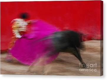 Canvas Print featuring the photograph Bull Fighter - Mexico by Craig Lovell