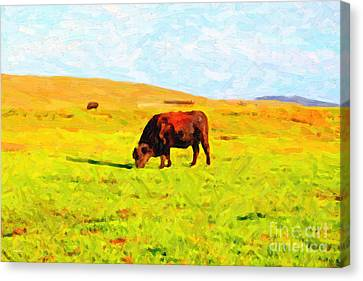 Bull Grazing In The Field Canvas Print by Wingsdomain Art and Photography