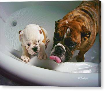 Canvas Print featuring the photograph Bulldog Bath Time II by Jeanette C Landstrom
