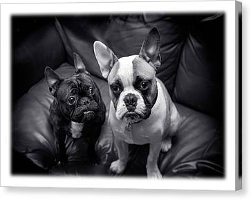Bulldog Buddies Canvas Print